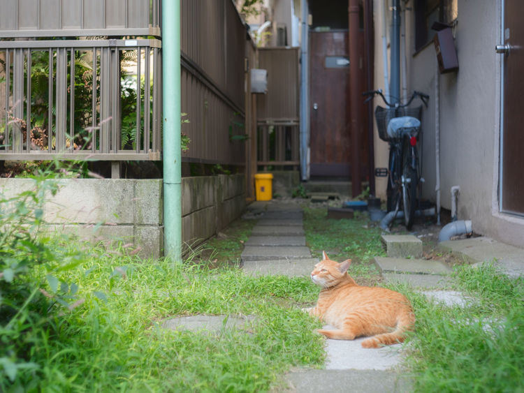 Relaxation time for this cat in Yanaka, Tokyo. Japan Japanese  Tokyo Yanaka Ginza Animal Animal Themes Cat Day Domestic Domestic Animals Domestic Cat Feline Ginger Cat Grass Mammal No People One Animal Outdoors Pets Plant Relaxation Sitting Vertebrate Whisker Yanaka