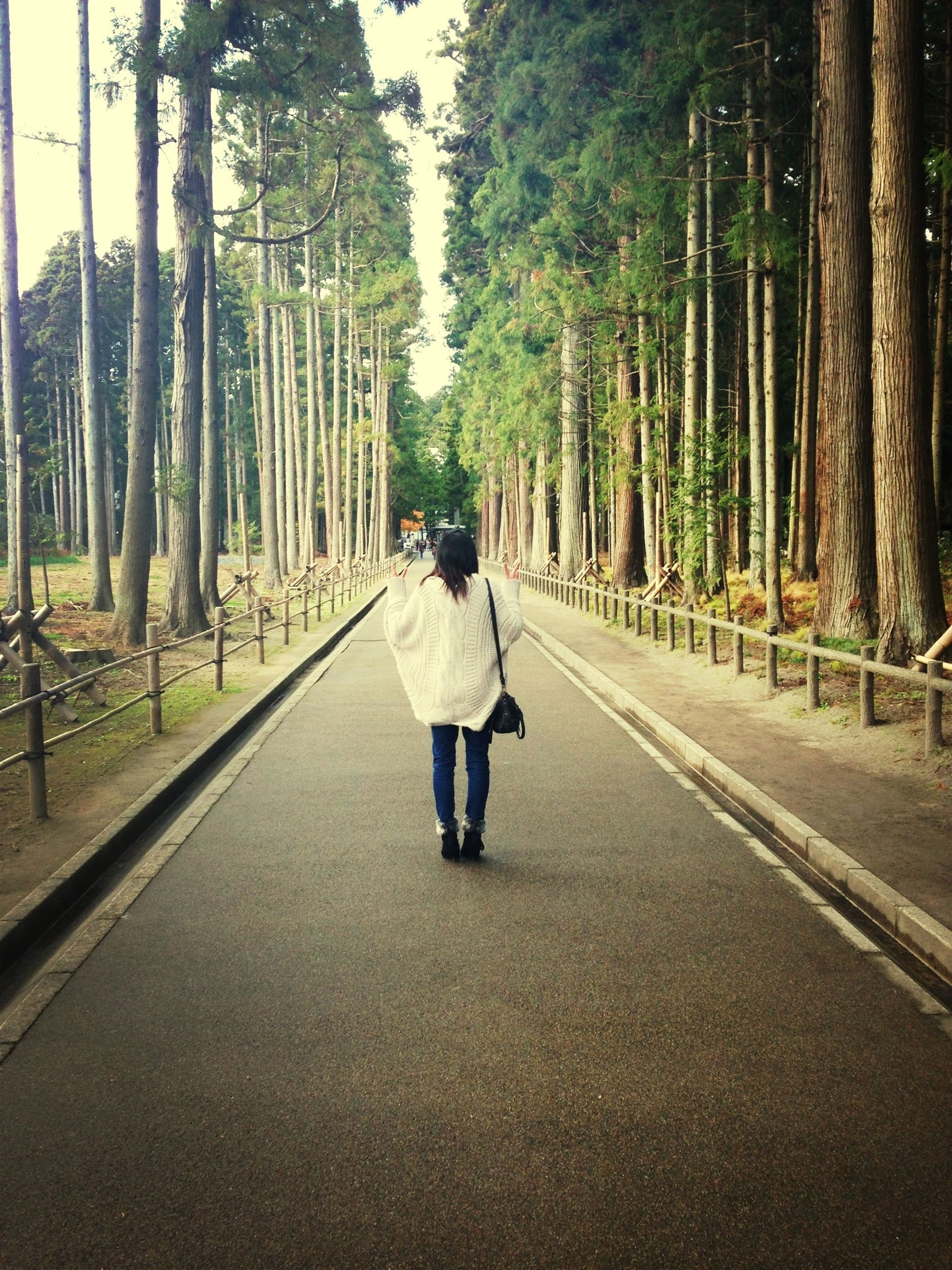 tree, the way forward, rear view, full length, walking, diminishing perspective, transportation, lifestyles, vanishing point, road, leisure activity, casual clothing, treelined, forest, men, tree trunk, day, person