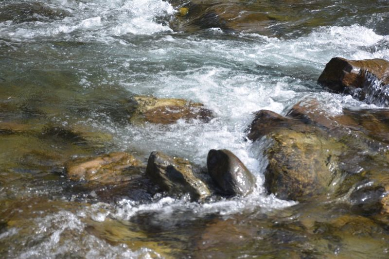 Ganges flowing over rocks River Photography Water Photography River Photography Water Photography Ganges River Ganges Rishikesh No People Day Water Outdoors Animals In The Wild Nature Animal Themes Mammal