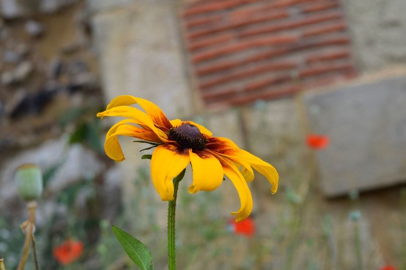 Flower Yellow Flower Yellow Nature Outdoors Summer Focus