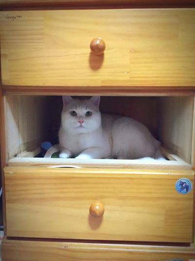 I just want to clean my drawer😝 Kittycat Cat 20151231 Newyearseve