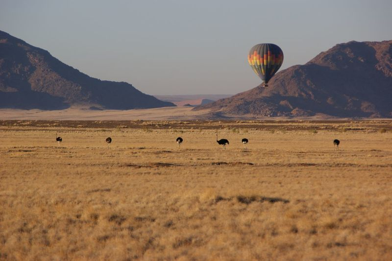 View of hot air balloons in field