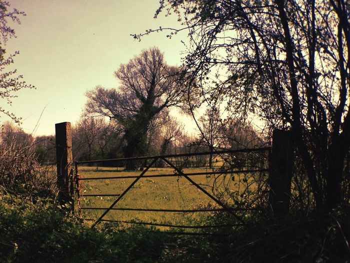 Pasture and Gate IPhoneography Shootermag AMPt_community Mobilephoto