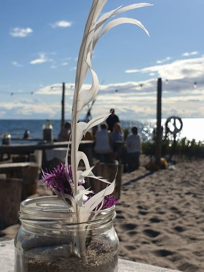 Close-up of purple flower on beach