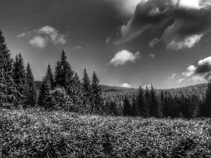 Monochrome Photography Cloud - Sky Nature Day Outdoors No People Tree Ukraine Carpathian Nature