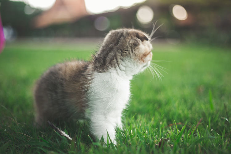 Close-up of cat looking away on field