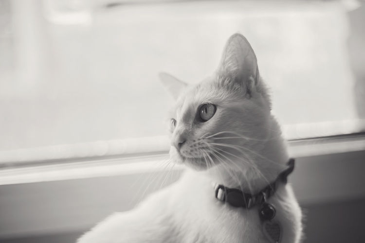 Animal Themes Black And White Cat Close-up Contrast Day Domestic Animals Domestic Cat Feline Green Eyes Headshot Indoors  Kitten Kitty Kitty Cat Light Mammal No People One Animal Pets Photography Photography In Motion Turkish Van Cat Breed Whisker Window