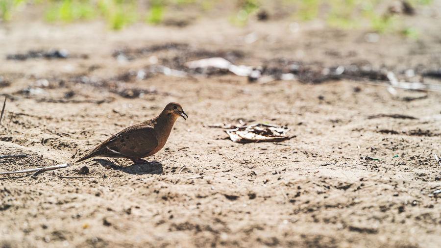 Close-up of birds on land