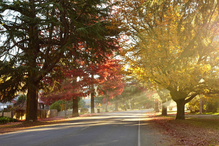 Shot at Bright, Victoria in autumn. Autumn Beauty In Nature Branch Day Growth Leaf Nature No People Outdoors Road Scenics Street The Way Forward Tranquil Scene Tranquility Transportation Tree