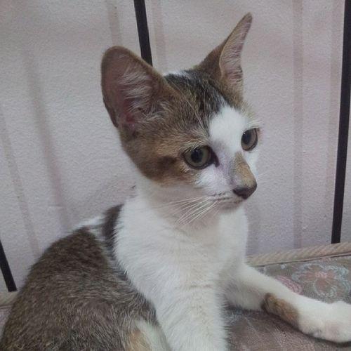 My cute little J.catsby model hehe ^^ Cute Catmodel  Catselfie Naughty