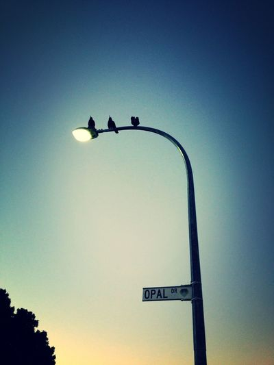 Magpies of Opal Drive Night Lights Bestoftheday EyeEm Best Shots What I See On The Way To Work