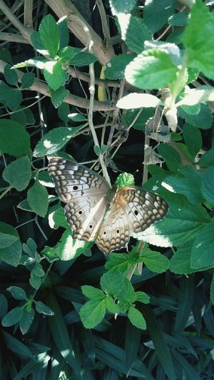 Mariposa tropical seco First Eyeem Photo