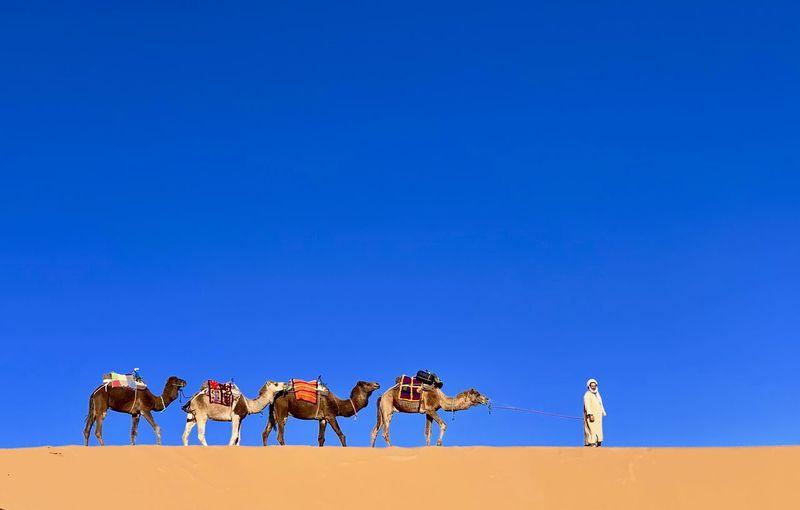 View of umbrellas on desert against sky