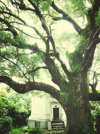 The Storyteller - 2014 Eyeem Awards Green Eye Em Nature Lover Fresh Air