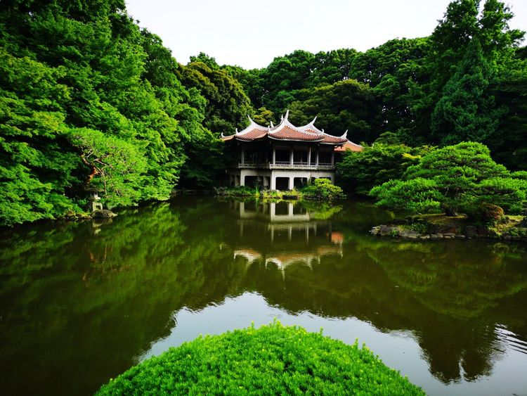 Tokyo Garden Water Lake Tree Reflection Architecture Sky Building Exterior Built Structure First Eyeem Photo