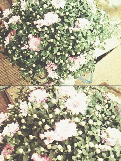 Hello World Flowers Flower Collection Garden
