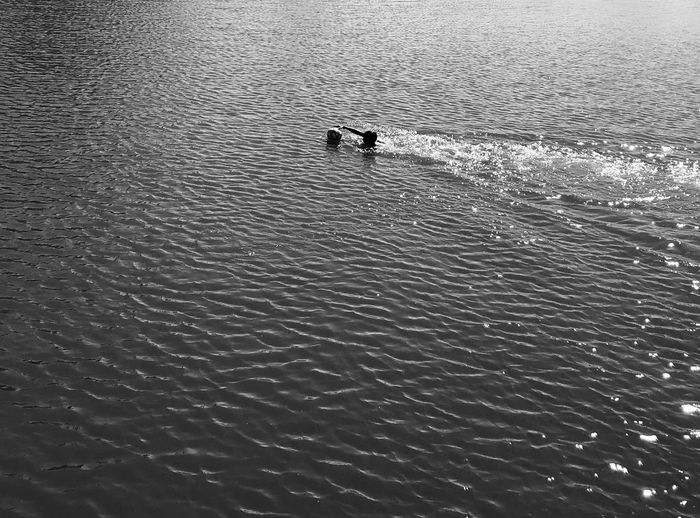 Swimming Water Waterfront Nature Vertebrate High Angle View Rippled Animal Day Real People Swimming Beauty In Nature Scenics - Nature Sunlight One Person Nautical Vessel Outdoors Sea