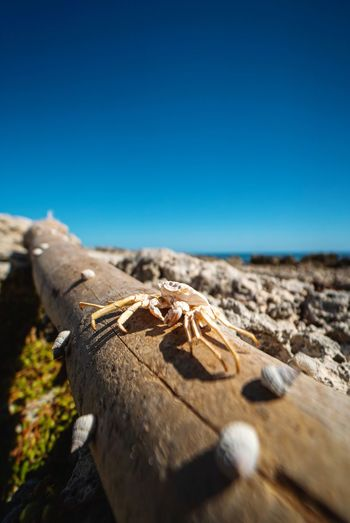 Close-up of crab on wood