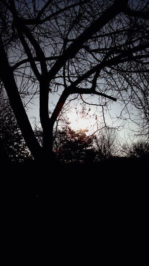 Taking Photos EyeEm Nature Lover Trees Sky And Trees Nature Collection January 2015 Nature Thankfull