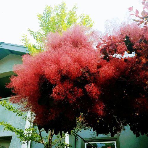 Tree Red Window
