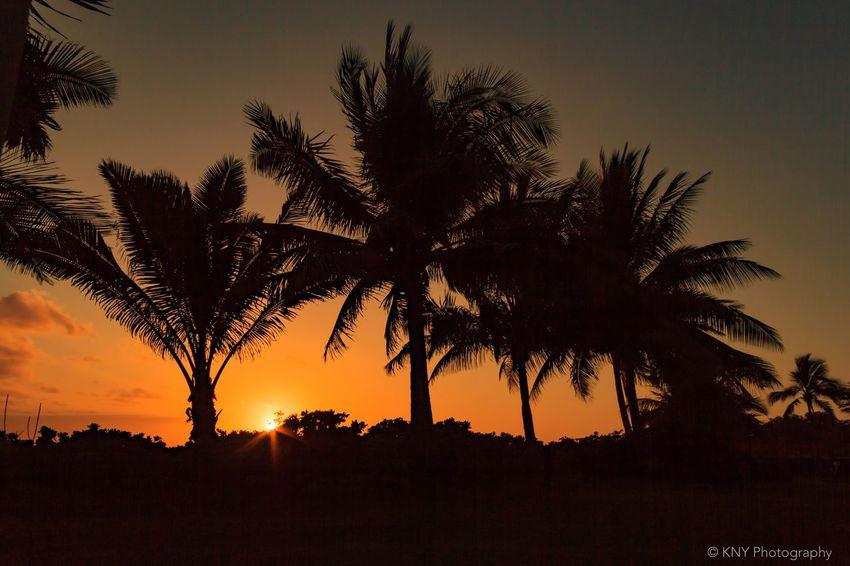 Sunset on the Beach. Waimea Kaua'i HI. Relaxing Taking Photos Enjoying Life Amazing View Hawaii Life Capture The Moment From My Point Of View Nature Photography Kauai Sky KekahaKauai EyeEm Nature Lover Sunsetcolors Sunset Hawaii Sunset View. Sunset WeatherPro: Your Perfect Weather Shot Sunset #sun #clouds #skylovers #sky #nature #beautifulinnature #naturalbeauty #photography #landscape EyeEm Best Shots - Sunsets + Sunrise EyeEm Best Shots Sunset_collection Photooftheday Sunset Collection Showcase March