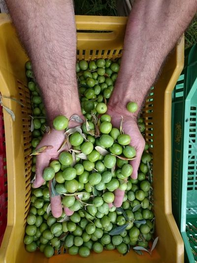 Directly above shot of cropped hands holding olives in crate