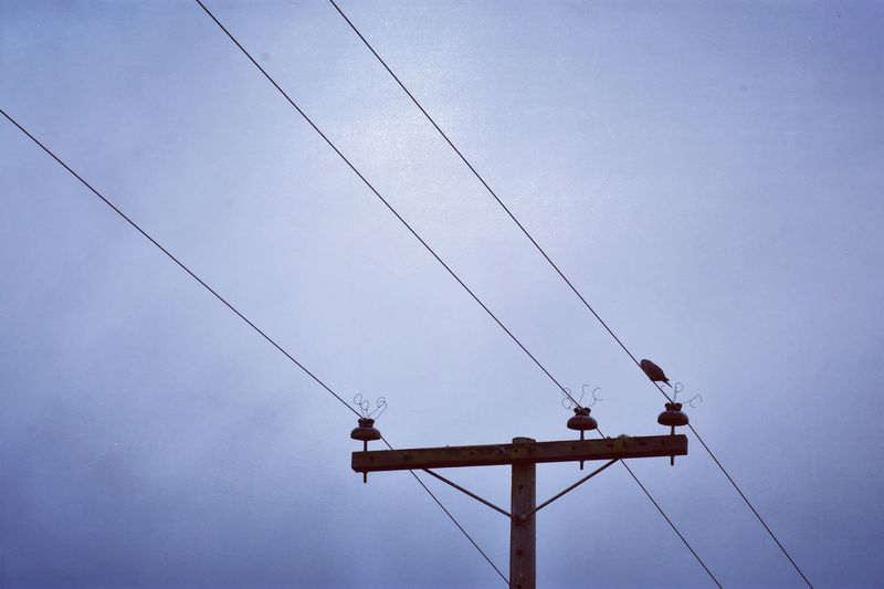 EyeEm Selects Cable Connection Low Angle View Power Supply Power Line  Electricity  Day Sky Bird Nature Perching Animal Themes