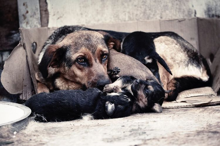 Pet Portraits Dog Pets Animal Puppy Lying Down Domestic Animals Cute Mammal Animal Themes No People Togetherness Sitting Outdoors Day Friendship Close-up