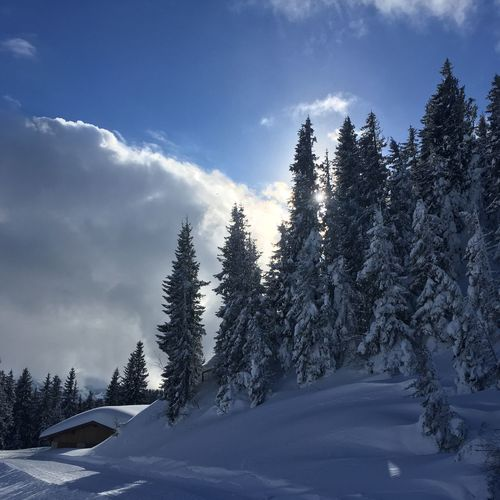 Skiing Wintersports Slope Plant Tree Sky Cloud - Sky Winter Cold Temperature Snow WoodLand Pine Tree Tranquility