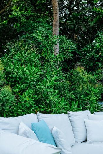 Plants growing on sofa in back yard