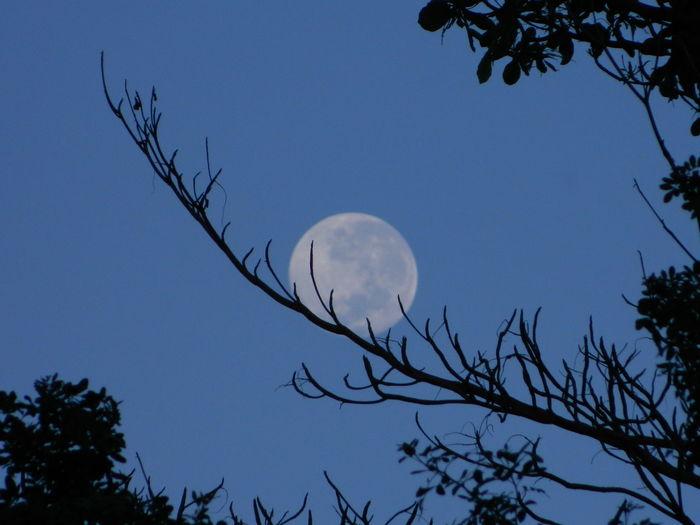 Moon Sky Tree