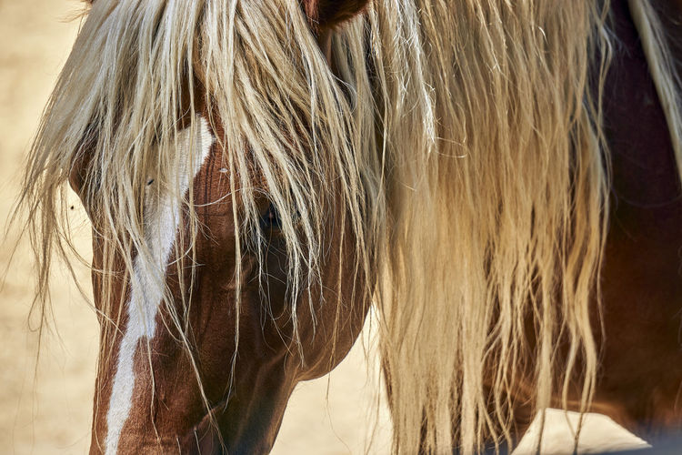 That horse mane, so beautiful on that light. Real People Hair Pets Women Horse Livestock Domestic Long Hair Straight Hair Hairstyle Blond Hair Mammal Mane Herbivorous Human Hair One Person One Animal Focus On Foreground Animal Wildlife Domestic Animals Vertebrate Capture Tomorrow