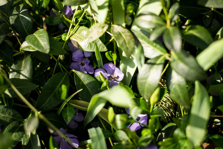 Growth Plant Beauty In Nature Flower Plant Part Flowering Plant Leaf Purple Freshness Green Color Vulnerability  Nature Fragility Close-up No People Selective Focus Petal Day Outdoors Inflorescence Flower Head Spring