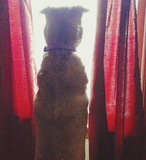 IPSHome My Puppy Mans Best Friend Waiting For My Humans