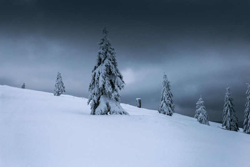 Snow Winter Cold Temperature Sky Scenics - Nature Tree Tranquility Tranquil Scene Plant Land Cloud - Sky Landscape No People Beauty In Nature Nature Non-urban Scene Field White Color Environment Pine Tree Snowcapped Mountain Coniferous Tree Snowing Storm Cloud Wintertime