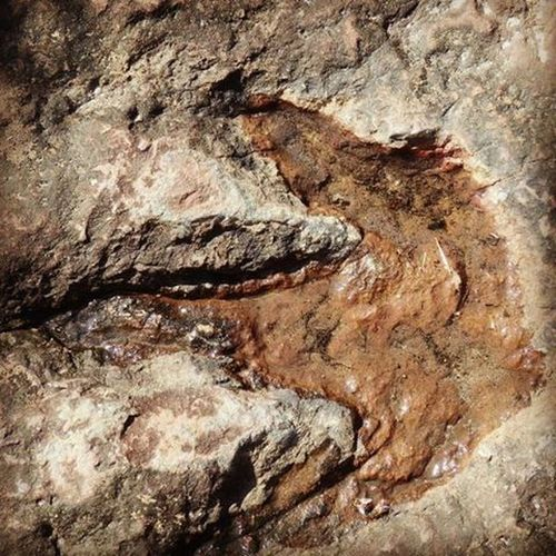 Footprints of dinosaurs in Phuluang Wildlife Sanctuary in Thailand ThousandMilesJourney.com ASIA Thailand Thailandphoto Phuluang Wildlifephotography Udonthani Dinosaurfootprints FootPrint Fossils