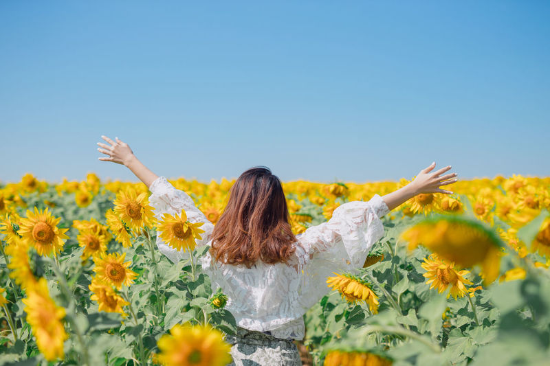 Rear view of woman amidst sunflower plants against clear sky