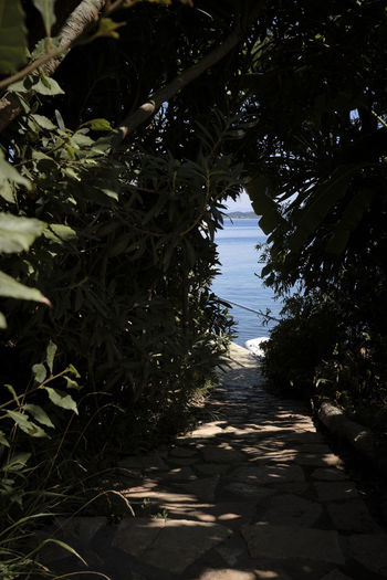 Corfu, Greece - 2018 Plant Growth Tree Nature Direction Sunlight The Way Forward Day Footpath No People Outdoors Tranquility Beauty In Nature Shadow Leaf Plant Part Land Diminishing Perspective Park Field Path Sea Mediterranean  Adventure Path Less Traveled My Best Photo Springtime Decadence