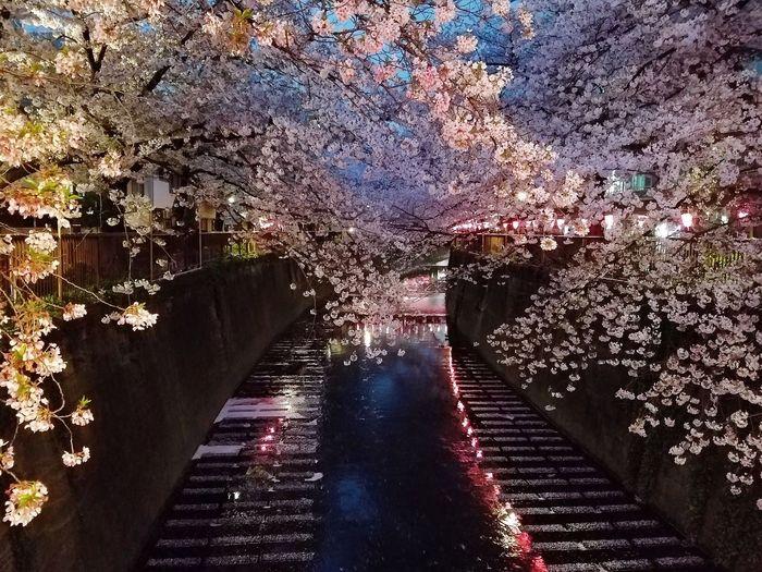 Illuminated trees against sky