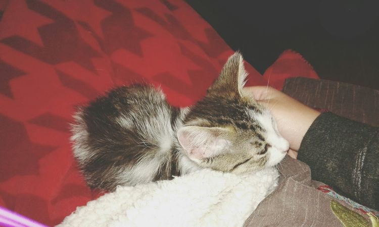 My new cat *0*♥ i love it! Relaxing Taking Photos Hi! Check This Out Enjoying Life Hello World Cat♡ Baby