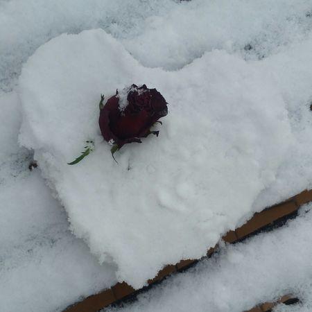 Une rose en hiver... Fleur Flower Head EyeEm Selects Coeur ❤ Neige Miseenscene Winter Nature No People Snow Outdoors Day Water