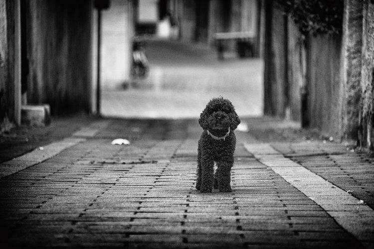 cute puppy EyeEm Selects Dog Puppy Beauty Animal Portrait Blackandwhite Streetstyle