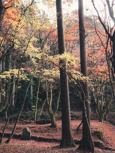 into the forest Tree Relaxing Peace And Quiet Autumn Tranquility Autumn Color EyeEm Nature Lover EyeEm Gallery Getting Inspired Color Of Life Nature Sound Of Life Forest EyeEm Best Shots Throughmyeyes Branch