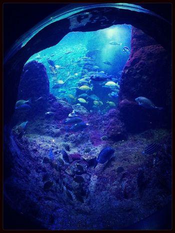 Swim 水族館 Fish