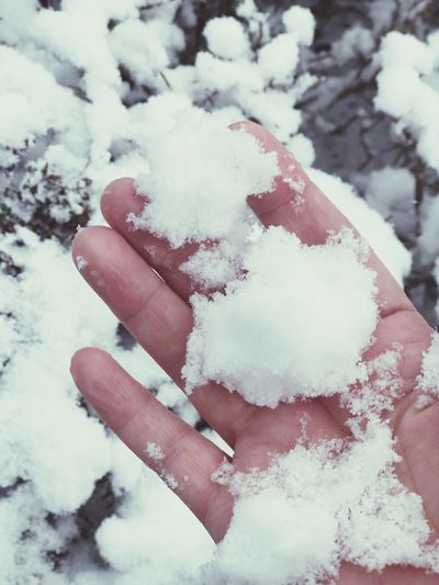 Snow Cold Temperature Winter Human Hand Frozen Finger Human Finger Close-up Day Nature Human Body Part Covering Food White Color Body Part One Person Hand Real People High Angle View