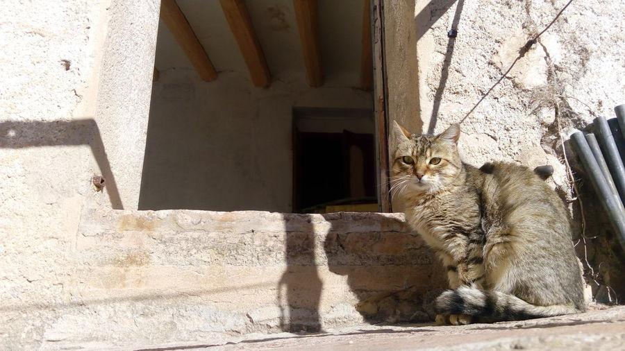 Gat, cat, gato First Eyeem Photo