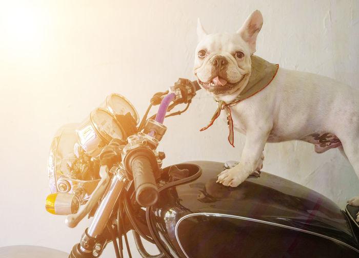 Portrait of dog sitting on car