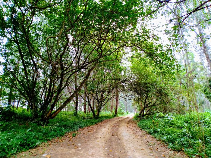 Rural Road Nature Walk Nature Walks Nature Walk ♥ Rural Road Rural Roads Tree Road Grass Landscape Green Color Plant Treelined Woods Greenery Green Grassland Walkway Lush