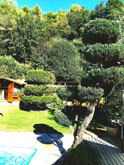 Piscine Bain Eau Soleil Vegetation Arbre Côte D'Azur Sud Nice Famile