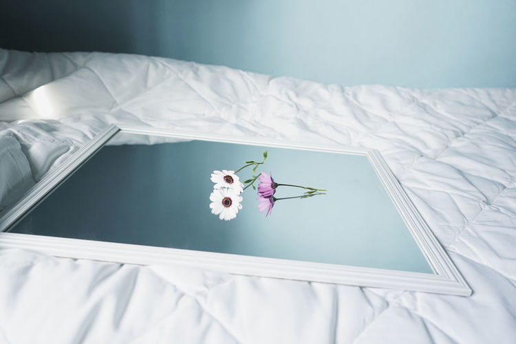 High angle view of white flower on bed